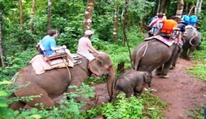 Elefanten-reiten-Thailand